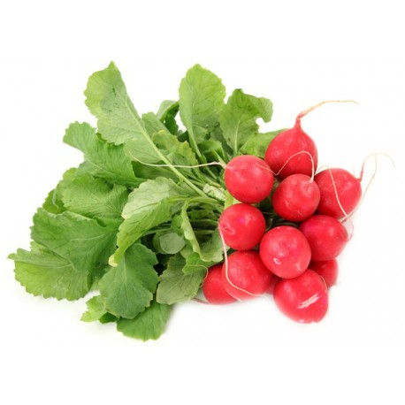 Red Radish Holland 125g